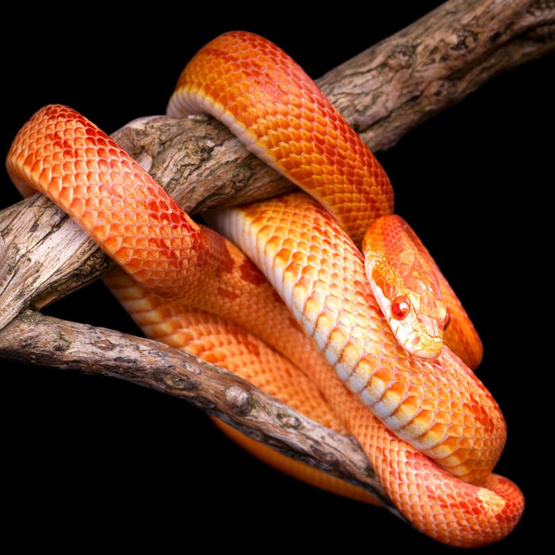 Schlangenhaltung zu zweit