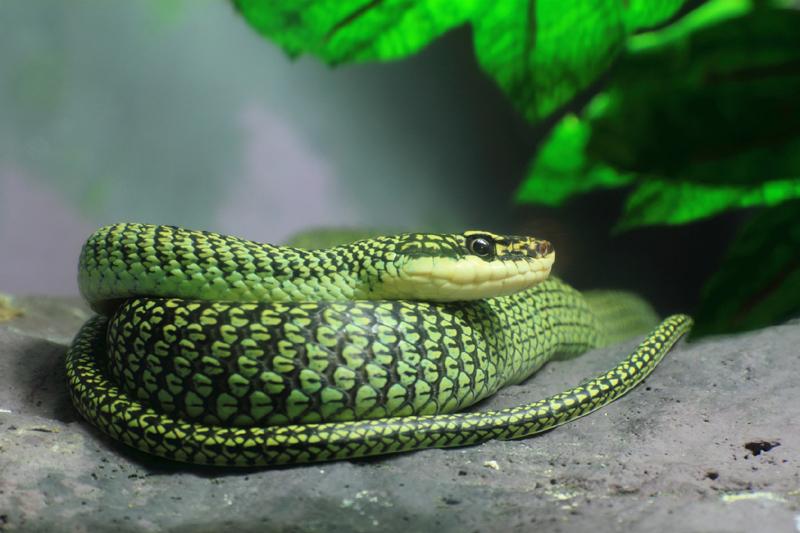 Schlange weg