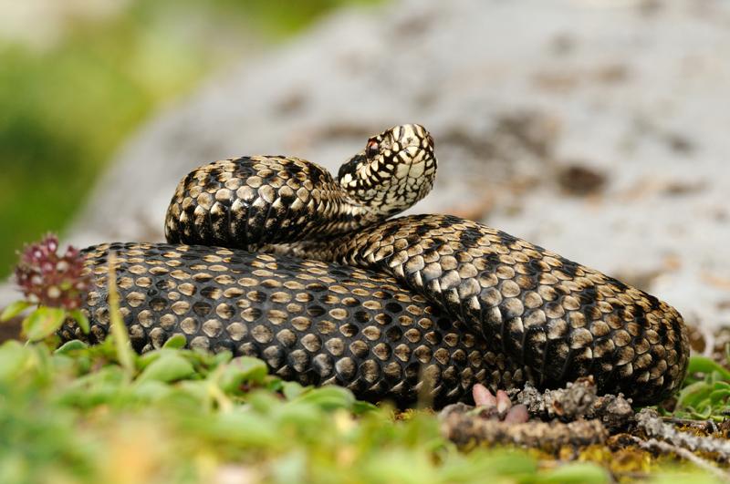 Schlangenkrankheiten